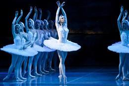 The Swan Lake - preview image